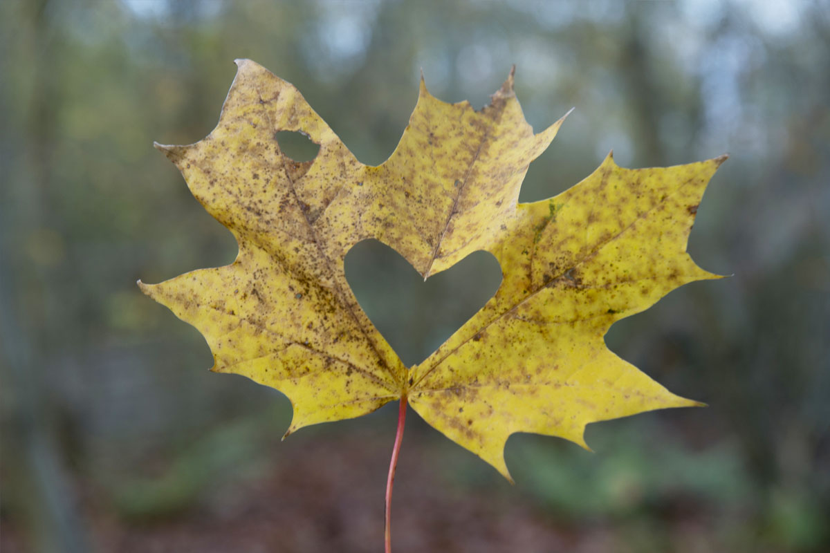 cheshire-wedding-photographers-leaf-heart